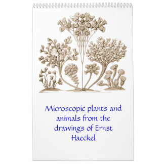 A calendar of microscopic plants and animals