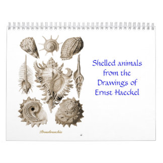 A calendar of shell drawings of Ernst Haeckel