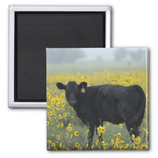 A calf amid the sunflowers of the Nebraska 2 Inch Square Magnet