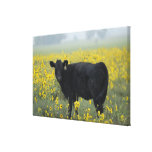 A calf amid the sunflowers of the Nebraska Gallery Wrapped Canvas