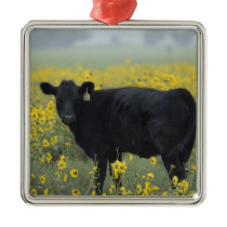 A calf amid the sunflowers of the Nebraska Metal Ornament
