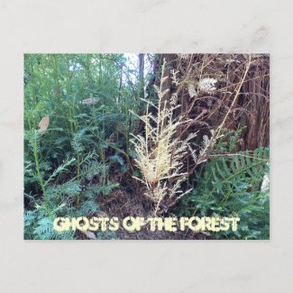 A CALIFORNIA MYSTERY: GHOSTS OF THE FOREST POSTCARD