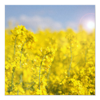 A canola field in spring card