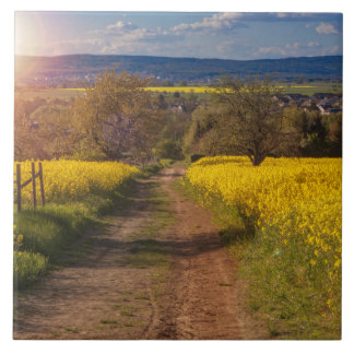 A canola field in spring tile