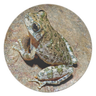 A Canyon Treefrog Dinner Plate