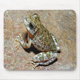 A Canyon Treefrog Mouse Pad