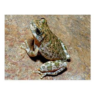 A Canyon Treefrog Post Card
