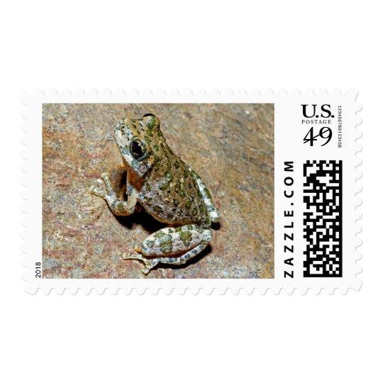 A Canyon Treefrog Postage