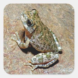A Canyon Treefrog Square Sticker