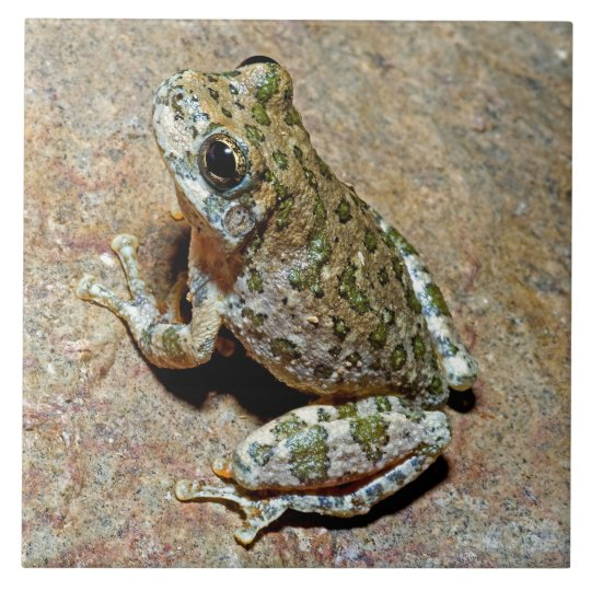 A Canyon Treefrog Tile