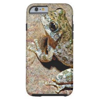 A Canyon Treefrog Tough iPhone 6 Case