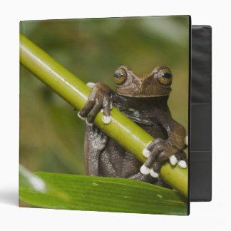 A captive Tapichalaca Tree Frog Hyloscirtus 3 Ring Binder