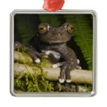 A captive Tapichalaca Tree Frog (Hyloscirtus Metal Ornament