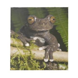 A captive Tapichalaca Tree Frog (Hyloscirtus Memo Note Pads