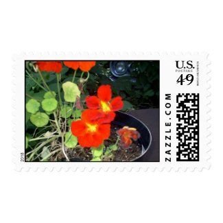 A Car in the Garden Postage
