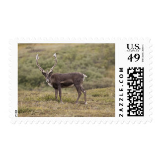 A caribou stands on the alpine tundra stamp