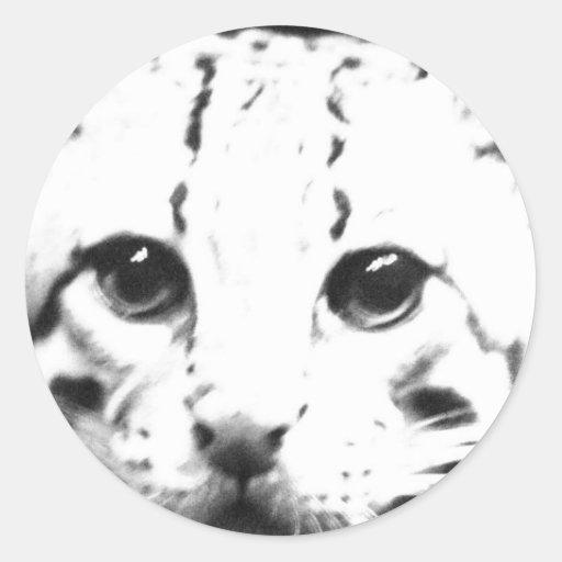 A Cat A Me Stickers