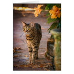 A cat and autumn leaves to celebrate Thanksgiving! Greeting Card
