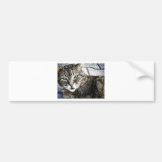 A cat bumper sticker