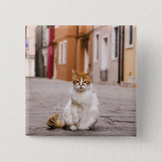 A cat in the streets of Burano, Italy.  2006. Button