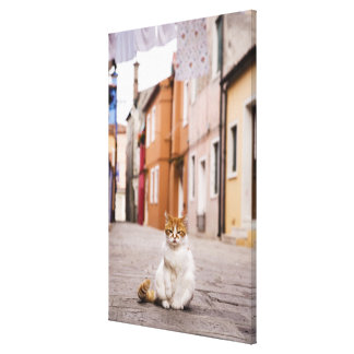 A cat in the streets of Burano Italy 2006 Stretched Canvas Prints