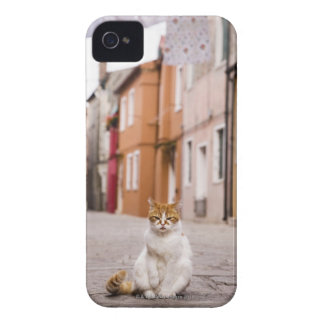 A cat in the streets of Burano, Italy.  2006. iPhone 4 Case-Mate Case
