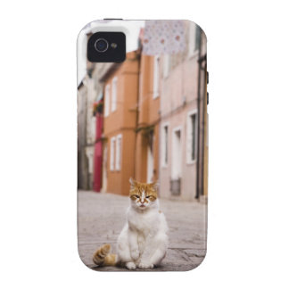 A cat in the streets of Burano, Italy.  2006. Case-Mate iPhone 4 Covers