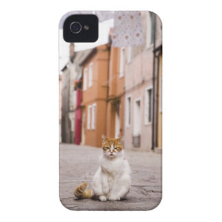A cat in the streets of Burano, Italy.  2006. iPhone 4 Covers