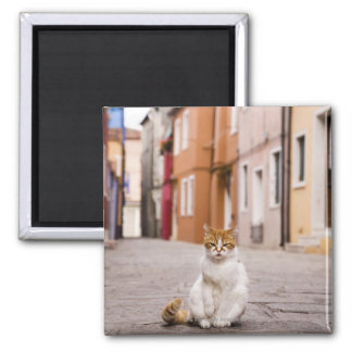 A cat in the streets of Burano, Italy.  2006. Magnet