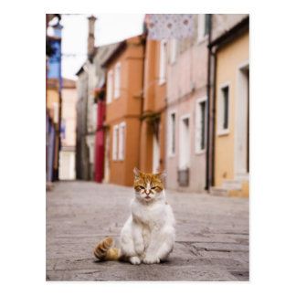 A cat in the streets of Burano, Italy.  2006. Postcard