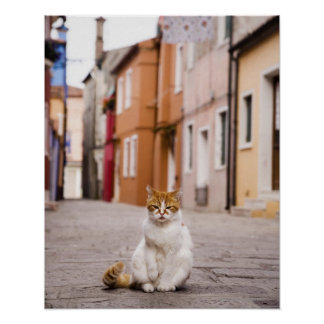 A cat in the streets of Burano, Italy.  2006. Print