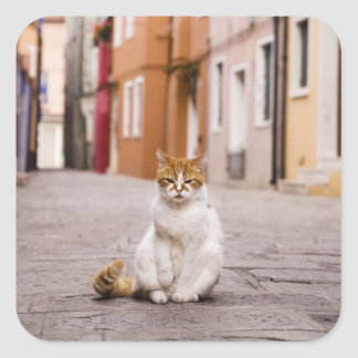 A cat in the streets of Burano, Italy.  2006. Square Sticker