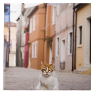 A cat in the streets of Burano, Italy.  2006. Ceramic Tile