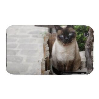 A Cat iPhone 3 Case-Mate Cases