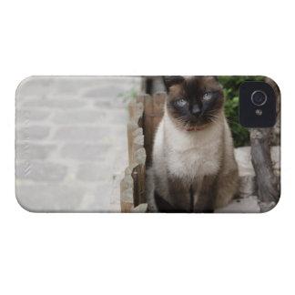 A Cat iPhone 4 Cases