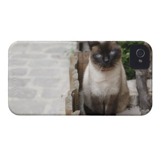 A Cat iPhone 4 Covers