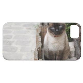 A Cat iPhone 5 Case