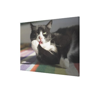 A Cat Licking It s Paw Stretched Canvas Prints