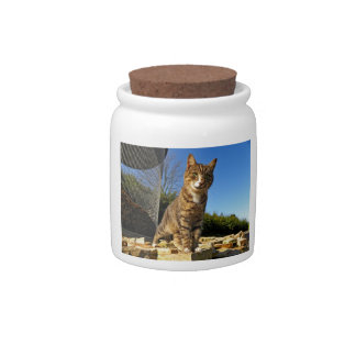 A Cat on Watch Candy Jar