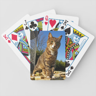 A Cat on Watch Playing Cards