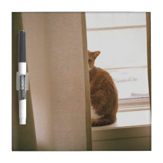 A Cat Sitting Behind The Curtains On A Window Dry Erase Boards