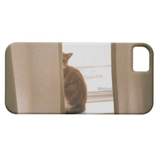 A Cat Sitting Behind The Curtains On A Window iPhone SE/5/5s Case