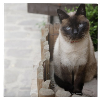 A Cat Ceramic Tiles