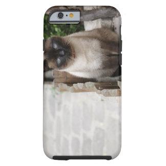 A Cat Tough iPhone 6 Case