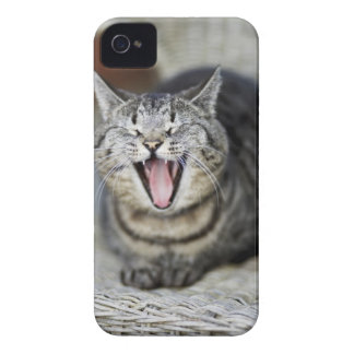 A cat yawning, Sweden. Case-Mate iPhone 4 Cases