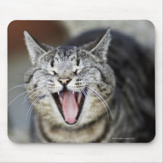 A cat yawning, Sweden. Mouse Pad
