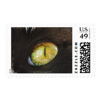 A Cat's Eye Postage Stamp