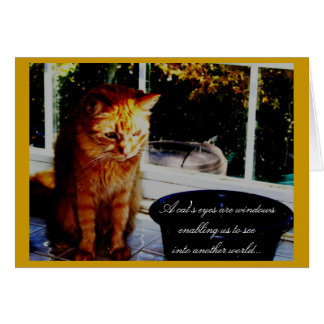 A cat's eyes are windows... card