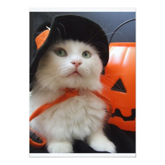 A Cat's Halloween Card