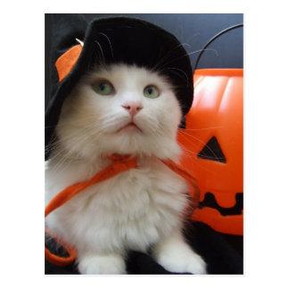 A Cat's Halloween Postcard